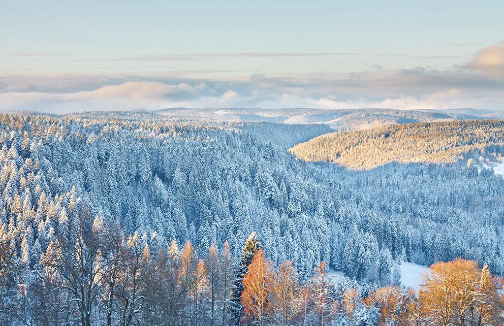 Winterwunderland Schwarzwald